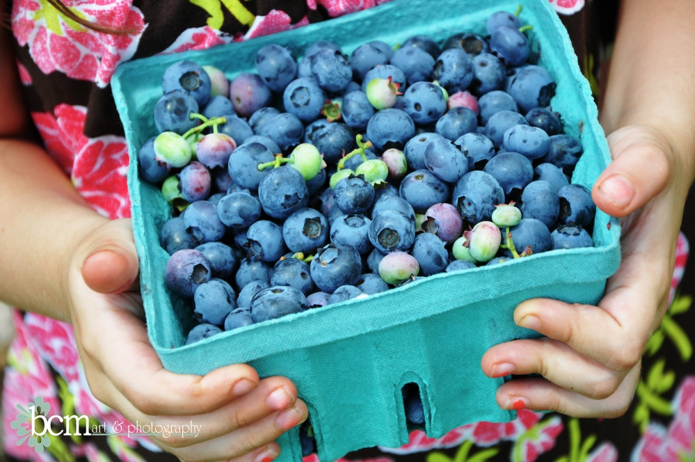Blueberries ~ bcmnotes 2012