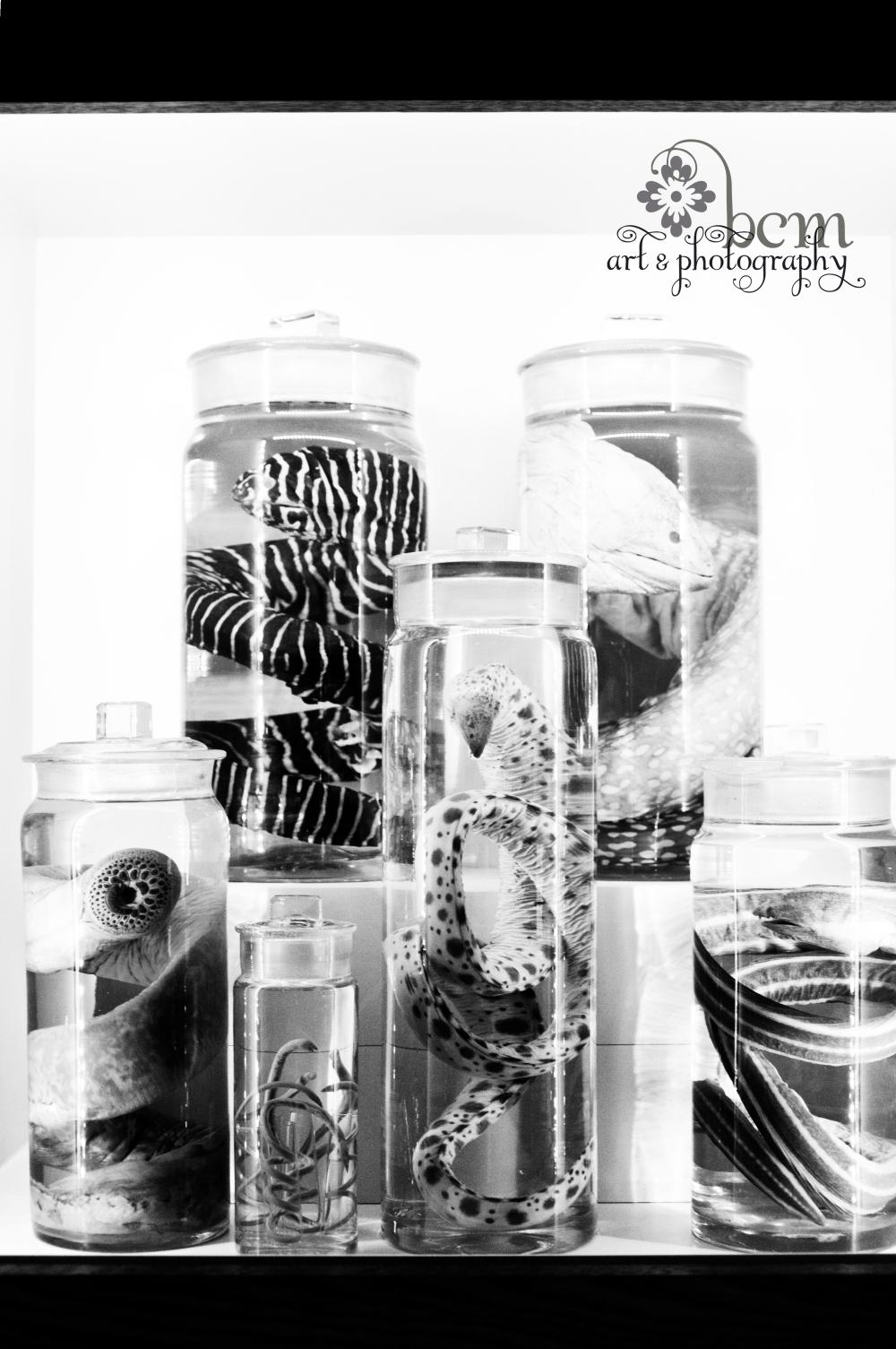 bcm art & photography 2013