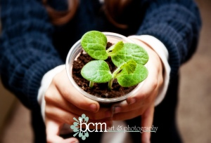 Grow Things ~ bcm art & photography 2013