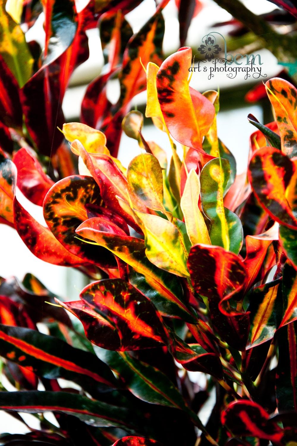 Ott's, Pushing Spring ~ bcm art & photography 2013